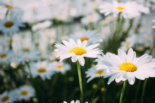 Unsere floralen Einlegekarten und unsere blumigen Einlegekarten bieten euch viel Platz für eure Informationen.