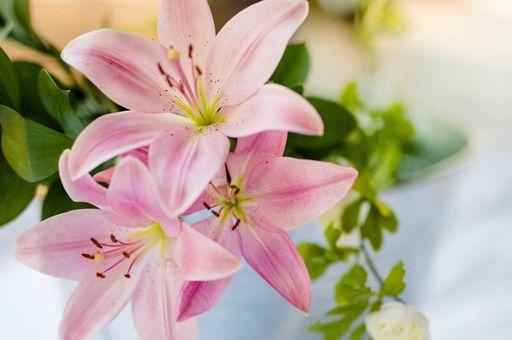 In dieser Kategorie könnt ihr florale Einsteckkuverts und blumige Einsteckkuverts für eure Hochzeit bestellen.